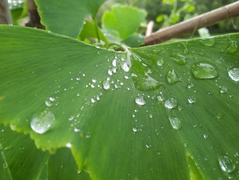 drops-of-water-green-leaf-955-466x350